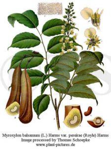 Peruvian balsam